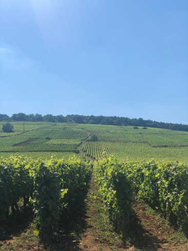 Rolling Hills of Burgundy